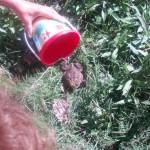 Found a frog, summer 2013